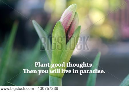 Inspirational Quote - Plant Good Thoughts. Then You Will Live In Paradise. With Lily Flower Plant Bl