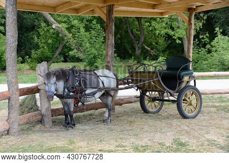 Pony With Two-wheel Carriage Is Waiting For The Rider