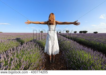 Back View Of A Woman Wearing White Dress Outstretching Arms In A Lavender Field