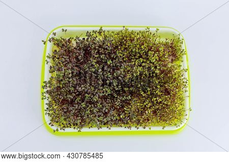 Microgreens Are Grown At Home. Microgreens Are Able To Grow Without Any Stimulants.