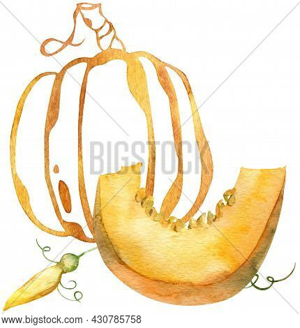 Watercolor Composition Of Orange Pumpkin Slice And Silhouette Pumpkin. Thanksgiving Day Pumpkins.