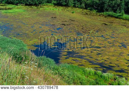An Algal Bloom Or Algae Bloom, The Water In The River Bloomed, The Appearance Of A Lot Of Green Alga