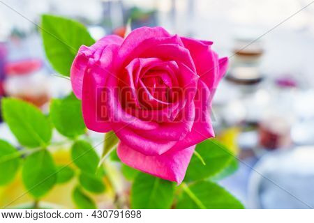 Home-grown Roses During The Flowering Period. Part Of Room And The Window On Blurred Background