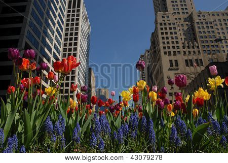 Downtown with flowers
