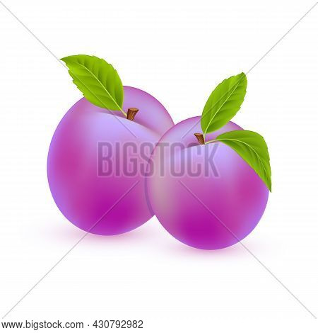 Vector Plum. Sweet Summer Fruits Isolated On White Background. Two Realistic Plums With Green Leaves