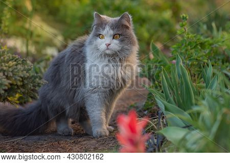 Young Cat Walks And Enjoying A Beautiful Garden. Dirty Cat Stand In The Meadow