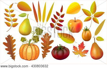 Set Of Autumn Leaves, Pumpkin And Apples Vector Illustration. Collecting Forest Leaves From A Tree.