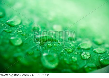 Macro Image Of Raindrops On Green Leaves Blur Background. Front View Of Water Drops On Green Leaf Af