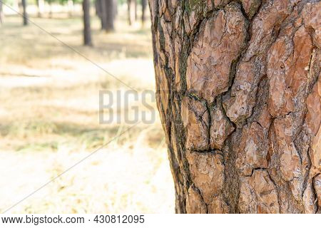 Crop View Of A Tree Trunk With A Bark Pattern Resembling A Human Face