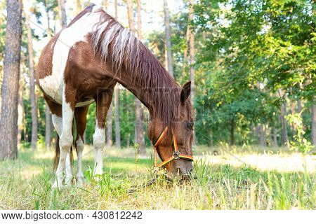 Horse Grazing In A Forest Glade On A Sunny Day