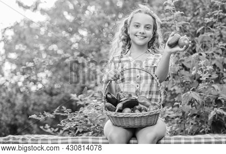 Eat Healthy. Summer Harvest Concept. Gmo Free. Healthy Food Concept. Kid Hold Basket With Vegetables