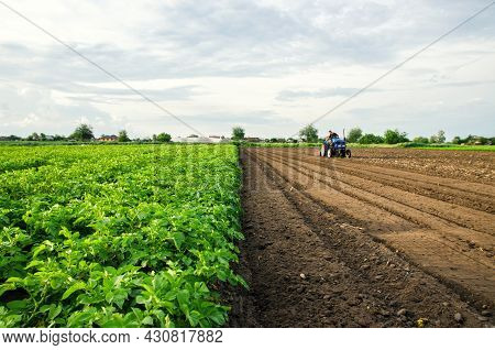 The Farmer Cultivates Half Of The Field. Harvesting And Destruction Of Tops After Harvest. Freeing U
