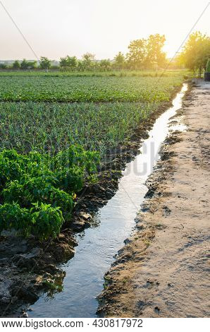 Irrigation Channel Filled With Water. Water From An Underground Well Is Supplied For Watering A Pota