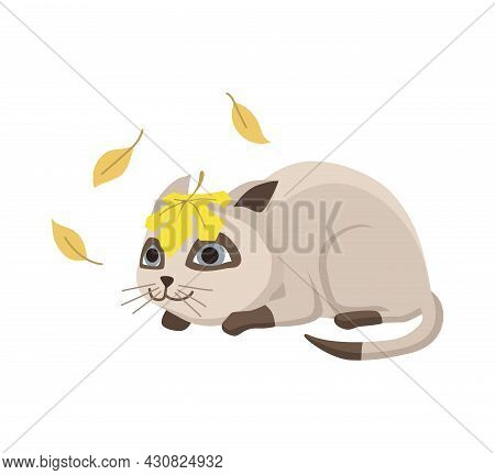 Cartoon Cat Character. Siamese Colorpoint Pet. Adorable Domestic Cat Watching The Falling Leaves. Fu