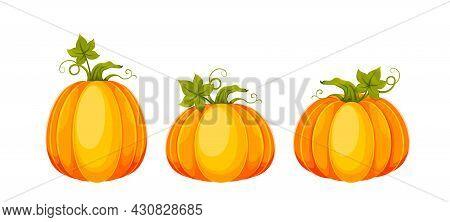 Cartoon Pumpkins. Set Of Three Big Fresh Pumpkins. Usable For Thanksgiving Day, Halloween Etc. Stock