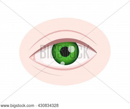 Human Eye Closeup Isolated On White Background. Healthy Organ Of Vision With Green Iris, Pupil, Scle