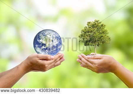 Tree Growing In Human Hand With Planet In Human Hand World Earth Day And Environmental Conservation