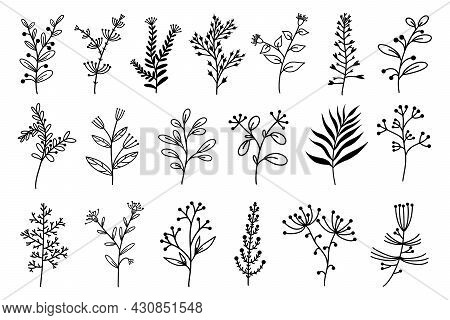 Herbs And Flowers Set Of Vector Elements. Hand-drawn Plants. Collection Of Botanical Sketches. Field