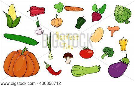 Harvest Time Lettering. Harvest Time Vegetables Doodle Set Bundle Vector Hand Drawing. Autumn Mood R