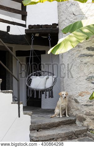 Entry of a Swiss house with a beautiful dog waiting at the door. A comfortable round chair is hanging.