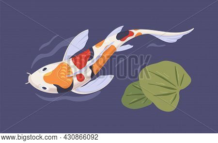 Japanese Spotty Koi Fish Swimming In Garden Pond With Leaf. Top View Of Asian Decorative Carp In Wat