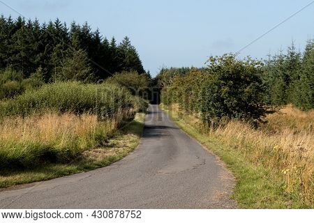 Deserted Country Lane On A Summer Morning