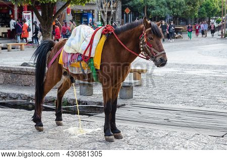 Lijiang,yunnan - April 13,2017 : A Male Horse Can Seen Peeing On The Street Of Shuhe Ancient Town.it