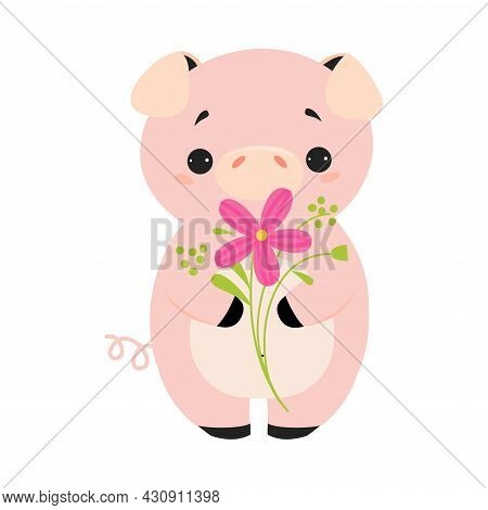 Cute Pink Pig Smelling Flower On Stalk Holding It With Paws Vector Illustration