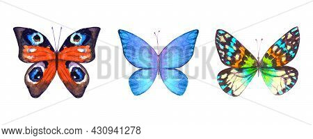 Watercolor Botanical Summer Set Of Multicolor Colorful Butterflies. Watercolour Hand Drawn Botany Bu