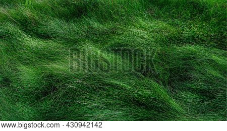 The Green Grass On The Field Bends Down From The Wind. The Image Is In A Low Key. The Concept Of Env