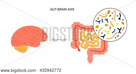 Gut Brain Connection And Microbiome Concept. Enteric Nervous System In Human Body, Small And Large I