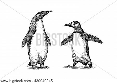 Emperor Penguin And Cute Baby. Small Cute Family. Vector Graphics Black And White Drawing. Hand Draw
