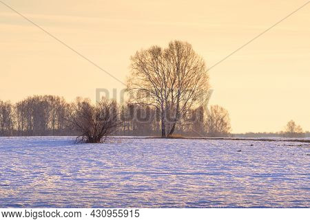 Spring Morning In The Field. Bare Trees In The Middle Of Melting Snow Against A Bright Yellow Sky. S