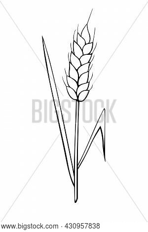 Vector Outline Spikelet Of Wheat Isolated On White Background. Hand Drawn Contour Clipart In Doodle