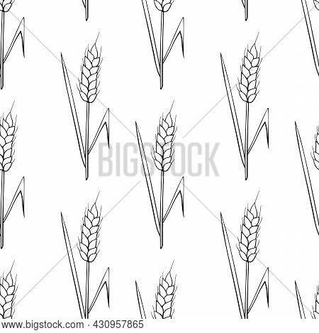 Wheat Spikelets, Vector Seamless Pattern. Black Outline Drawn In Sketch Style Isolated On White Back
