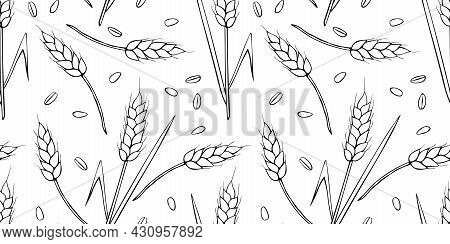 Wheat Spikelets And Grains, Vector Seamless Pattern. Outline Drawn In Sketch Style Isolated. Design