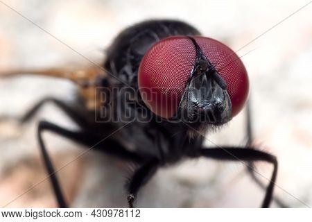Macro Photography Of Black Blowfly On The Floor