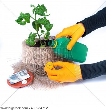 Bottles With Agent Against Plant Diseases And Sprayer On White Background. Hands Processing Vegetabl