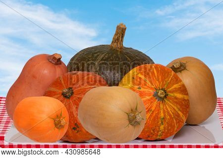 Pile Of Pumpkins. Close-up Of A Stack Decorative Colorful Pumpkins On A Table In Front Of Abstract B