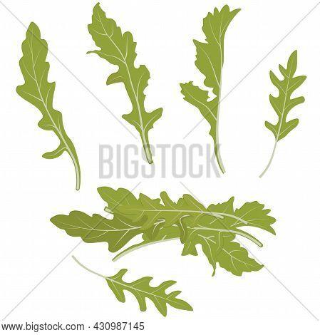 Rucola Leaves Vector Stock Illustration. Greens. Rocket Salad Or Arugula Heap. Green Lettuce Leaves.