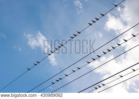 Many Swift, Swallow Or Martlet Birds Perching On Wires Over Background Of Blue Sky With Copy Space,