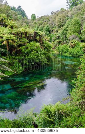 Blue Spring Which Is Located At Te Waihou Walkway,hamilton New Zealand. It Internationally Acclaimed