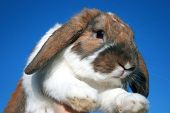Funny small red and white rabbit and blue sky poster