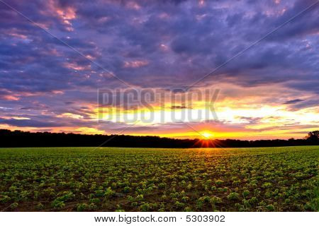 Sunset Over Farmland