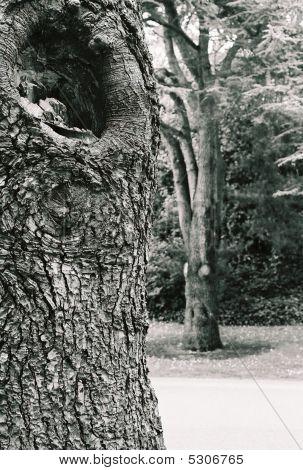 Tree bark, black-and-white