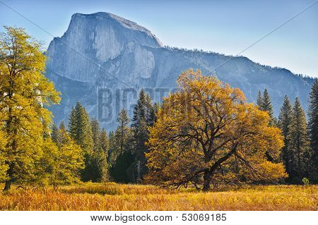 Autumn Trees and Half Dome