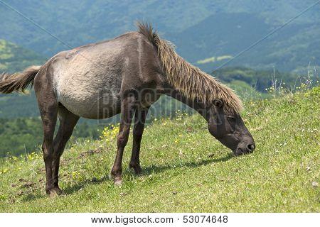 Close up grazing horse