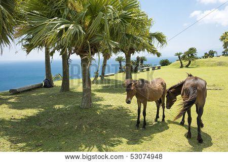Seashore horses family