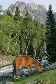 a wild horse grazing beside a river that flows down a mountain. poster