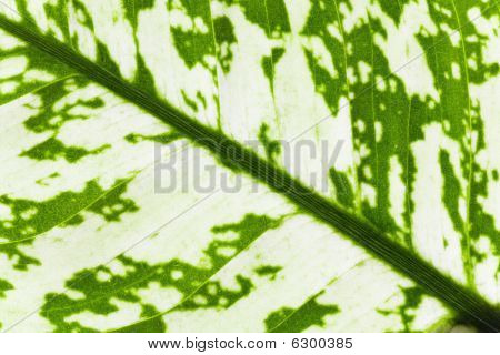 Leaf Fragment Of Window Plant
